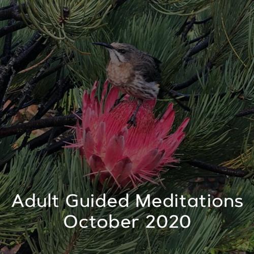 Adult Meditations - October 2020