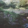 Garden Song | Phoebe Bridgers mp3