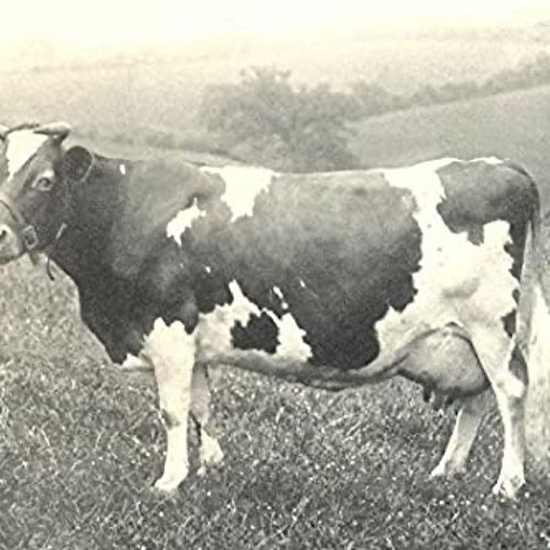 Cows At War - 26:06:2020, 21.25
