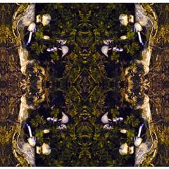 Psilocybin Forest