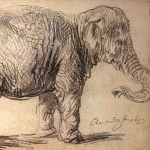 RembrandtLIVE Podcast #2 - Hansken. Rembrandts olifant