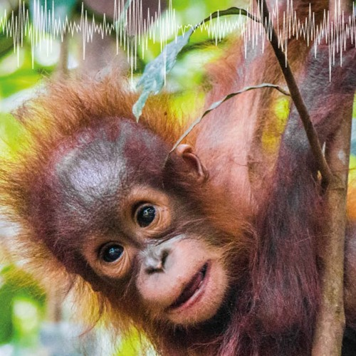 Improving Human Health And Wellbeing Will Protect Primate Populations