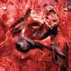 Bovine, Swine, And Human-Rinds