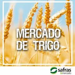 Mercado interno de trigo tem baixa liquidez e foco no plantio