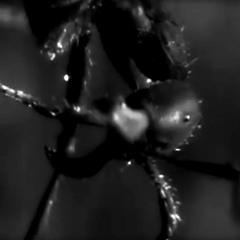 Webley - Pandemic - Mastered
