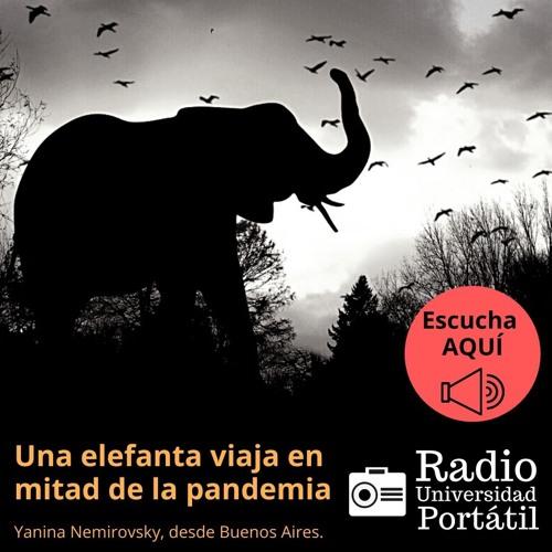 Una elefanta viaja en mitad de la pandemia