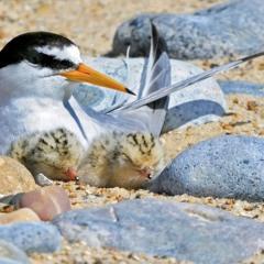 P1 Ground Nest.wav