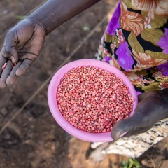 FAO Podcast - COVID-19: Impacts on humanitarian work in South Sudan