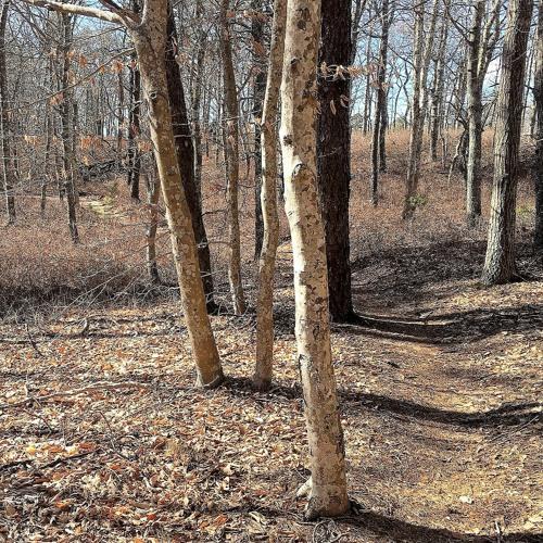 A Woodland Moment Blog Post