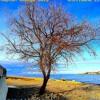 Download Chilluana 15 - Kaplan Lounge Cafe 2020 Mp3