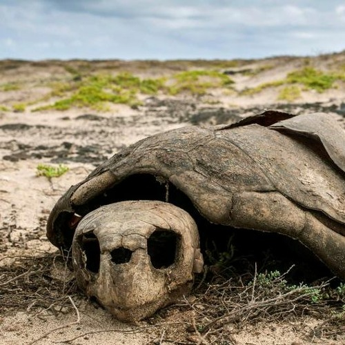 Living Planet: Now or never: The planet's biggest environmental problems — part 1