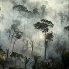 through the burning mist