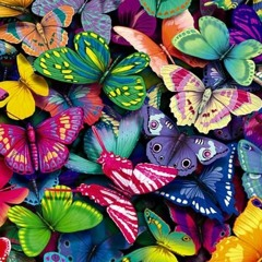 Efecto Mariposa 🦋