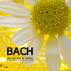 Beethoven - Calir de Lune Study Music (2nd Version)