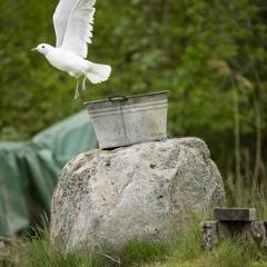 Birds - 3/6/2021 - of Makholma Shore