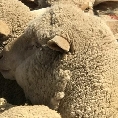 Livestock carbon emissions down 55 per cent