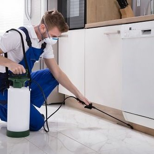 Errors That Professionals Avert While Carrying Out Pest Control