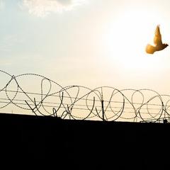 No Limits - No Borders