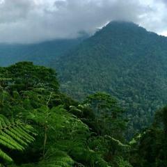 Tropical Jungle type beat
