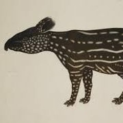 """Improvisitons for Piano #104 """"Tapir"""" (For EY)"""