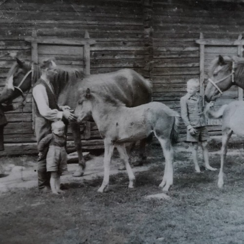 14. Hevonen isännän työtoverina