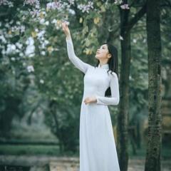 Tuyết rơi mùa hè - Trần Lê Quỳnh - Tui hát