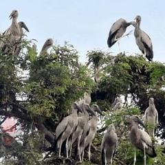 শামুকখৈল পাখির অভয়ারণ্য কানাইপুকুর গ্রাম | Jagonews24.com