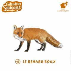 Audiofocus - Le renard roux