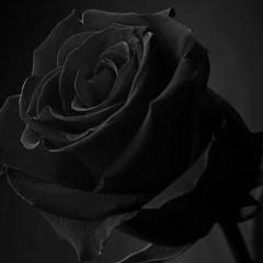 Dark Roses (Instrumental)