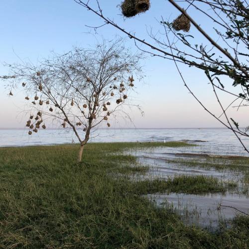 Early morning on Lake Langano, Ethiopia