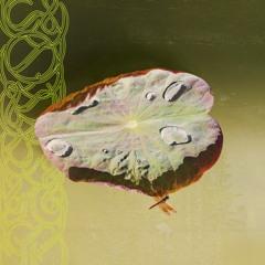 PIST001 // Biodive - Limpet Minds EP (w/ Priori Remix)