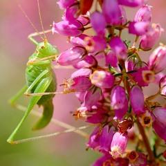 La Fibre-Journée de la biodiversité (Lasseube) 21 09 2021