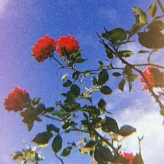 Slchld - Camellia