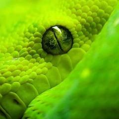 Oculi Serpentum -- --  Triptamina   165bpm   16bit   0db