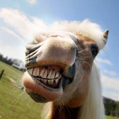 38. Darovanému koňovi na zuby nepozeraj