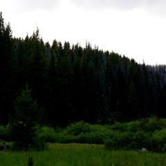 Long Swamp, Dusk, 2019-07-16