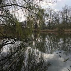 Bird sounds in spring - Karower Teiche, Berlin, 18/04/21