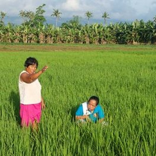 10.06.21 / The Story of Sustainable Rice