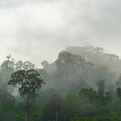 Borneo Rainforest - Afternoon Storm with rolling thunder