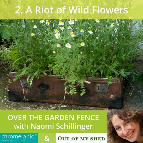 OVER THE GARDEN FENCE 2 | A Riot of Wild Flowers