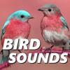 Energetic Bird Sounds
