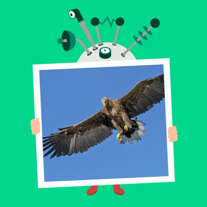 Afsnit 54: Hvordan kan fugle flyve?