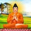 Mỗi Tối Trước Khi Ngủ Nghe Lời Phật Dạy Lòng Nhẹ Ngủ Sâu Giấc Mọi Sự May Mắn Thuận Lợi Vô Cùng