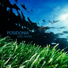 Posidonia
