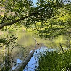 Walk around Jewel Lake April 2021