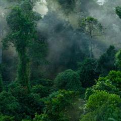 Thunderstorm in the Borneo rainforest