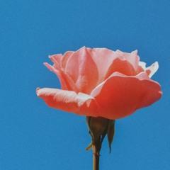 novo amor - euphor / slowed + reverb