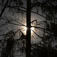 Snaps and cracks - 15/2/2021 - Freezing Kirpakka Forest