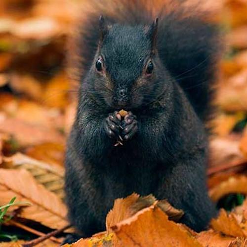 blacksquirrel's avatar