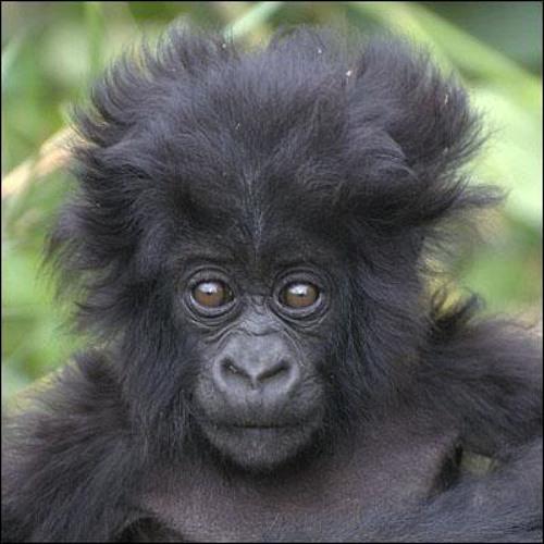 gbass's avatar